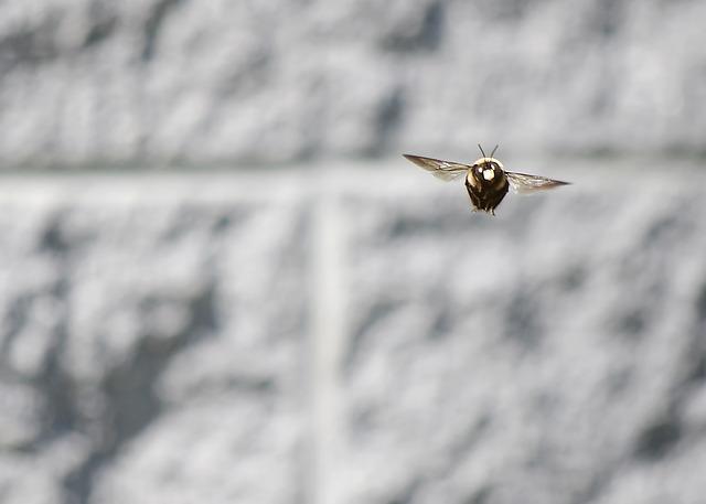 クマバチイメージ