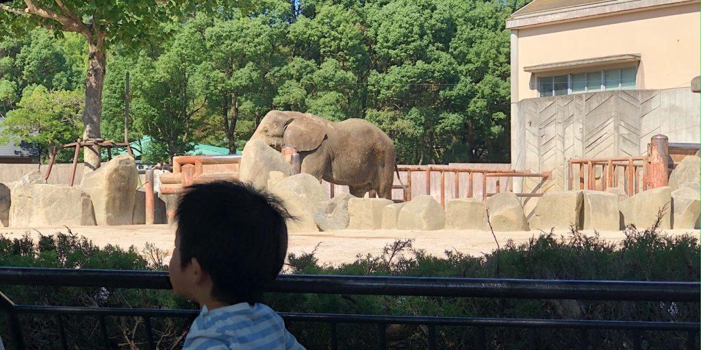 安佐動物公園ゾウ